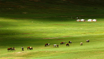 Mongolie centrale cheval