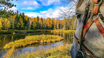La Laponie à cheval