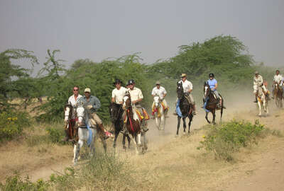 Chevaux Marwaris au galop en Inde