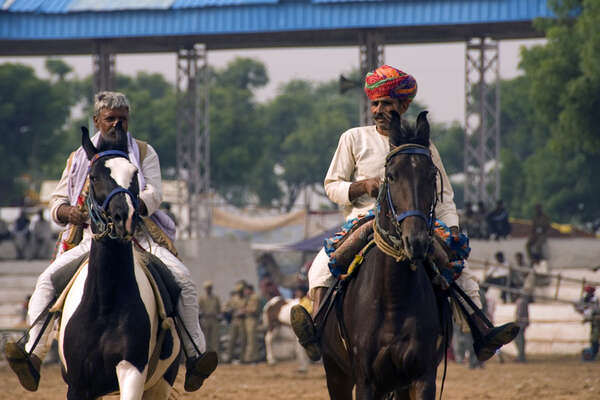Chevaux Marwaris en inde
